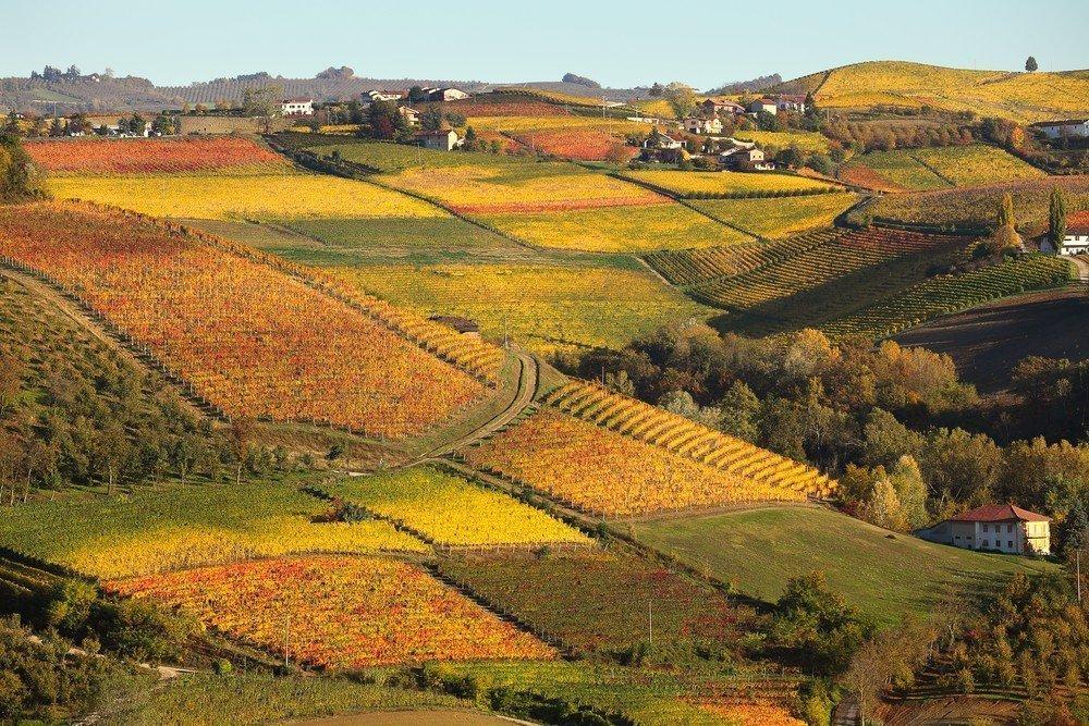 Купить виноградник во франции регион бордо можно купить квартиру в дубае