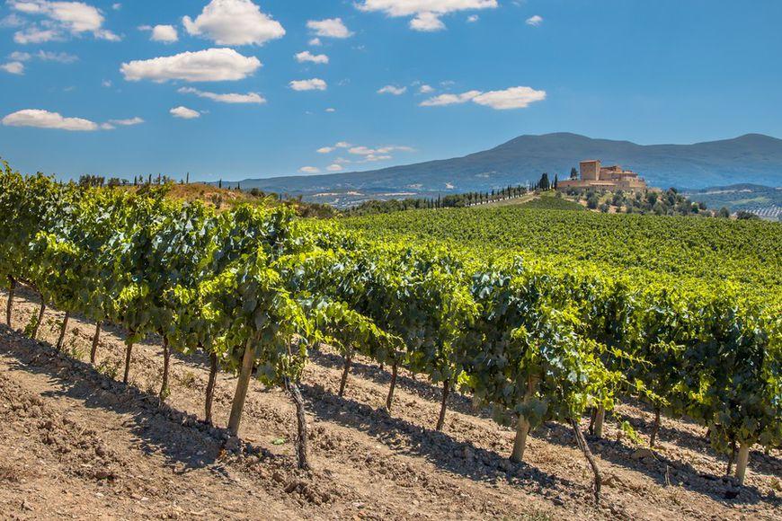 Продажа виноградников во франции продам финский дом